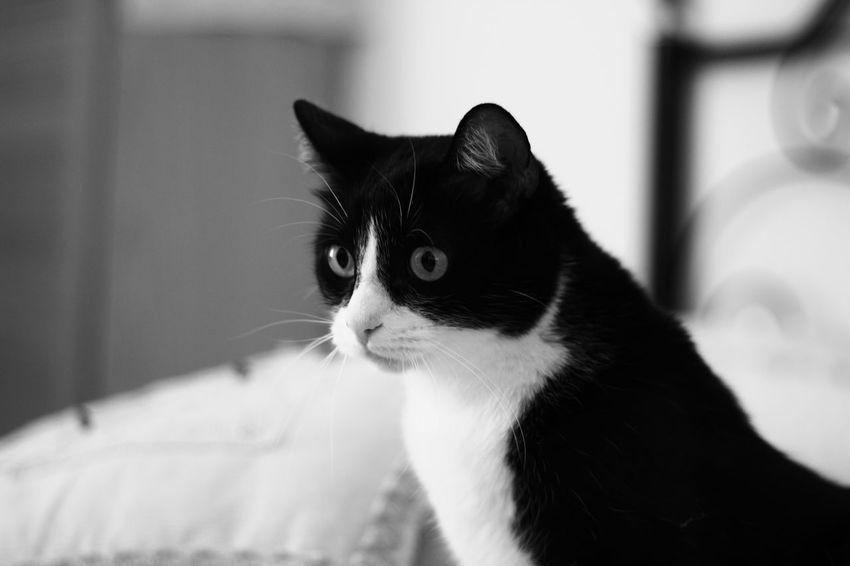 Animal Cat Cats Gatti Gatti Domestici Gatto