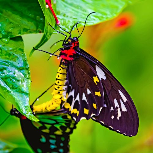 Beauty in nature. Perching Flower Spread Wings Full Length Butterfly - Insect Leaf Multi Colored Insect Flower Head Close-up Butterfly Animal Antenna Animal Wing Animals Mating Pollination Animal Markings Mating