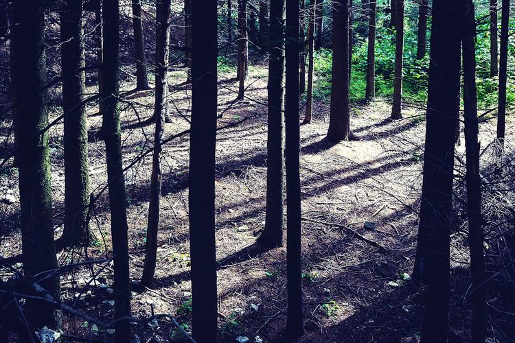 Light And Shadow Wald Nature Trees Forest Stand Out From The Crowd