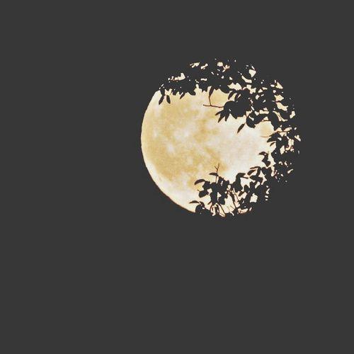 Luna Alternative Moon Full Moon