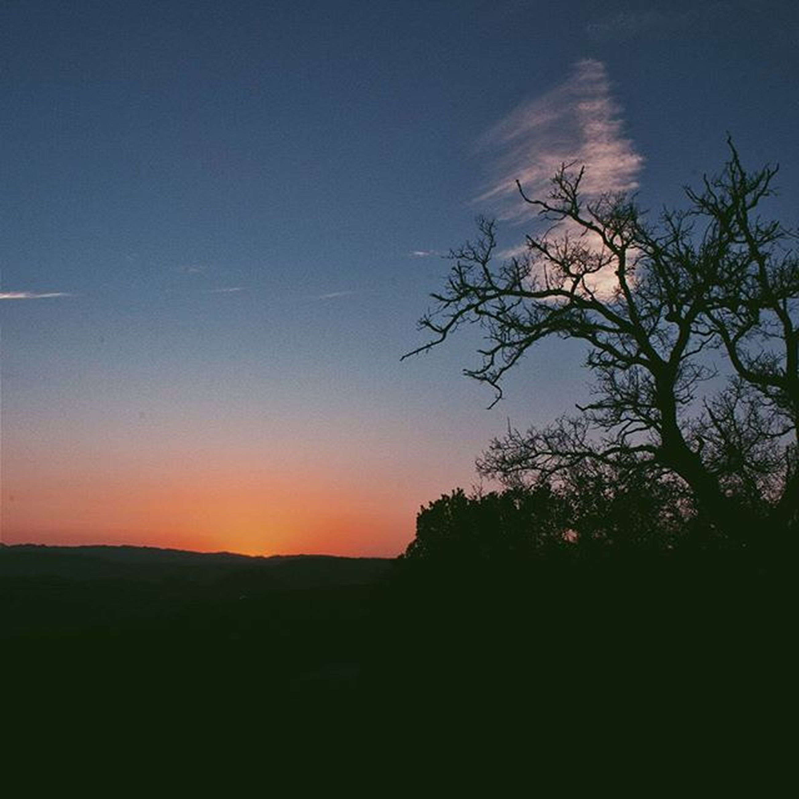 silhouette, sunset, tranquil scene, tranquility, scenics, landscape, beauty in nature, tree, copy space, sky, nature, field, idyllic, dark, clear sky, dusk, outline, blue, horizon over land, outdoors