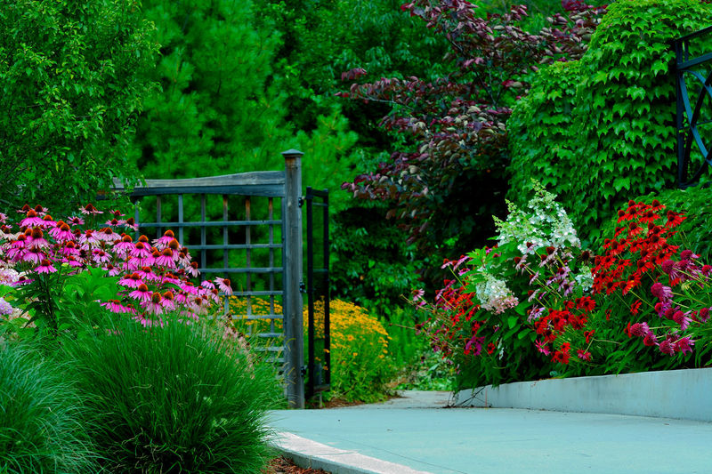 Garden Garden Flowers Gate Grass Landscape_Collection Nature Photography Trees Yellow Flower Day Flower Garden Garden Photography Green Leaves Growth Landscape Nature Nature Landscape Naturelovers No People Outdoors Passage Pink Daisy Plant Riverwood Conservancy Spring White Flower