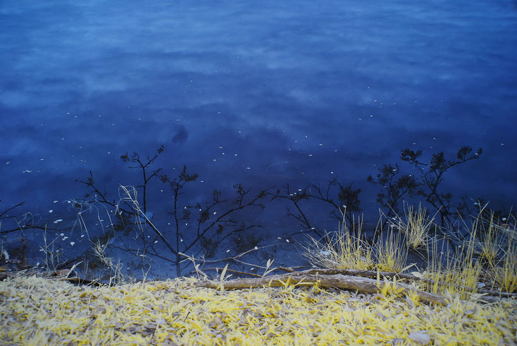 An infrared view of a lakeside with yellow grass. Infrared Abstract Arts Beauty In Nature Blue Color Infrared Day Grass Infrared Photography Lake Lake View Nature No People Outdoors Plant Shadow Tranquil Scene Tranquility Water Yellow Grass