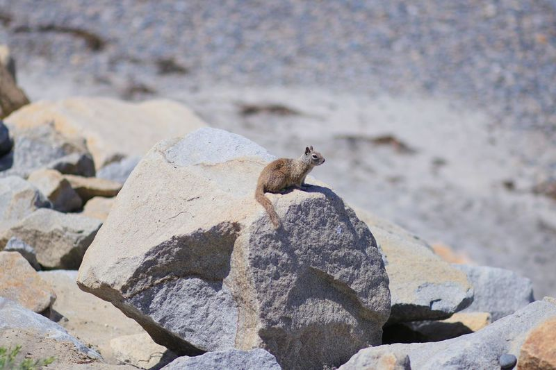 Squirrel Animal Wildlife Animal Animals In The Wild Solid Animal Themes One Animal Rock
