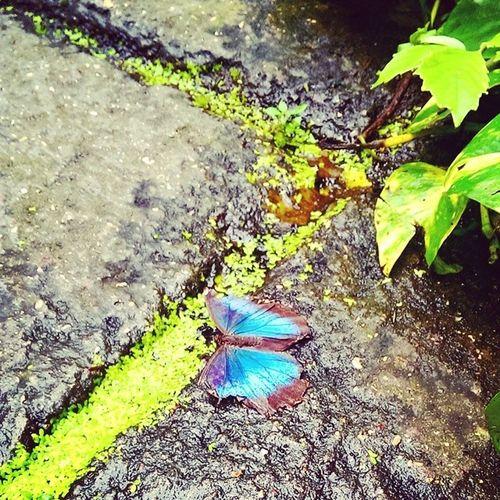 Butterfly Sommerfugl Randersregnskov