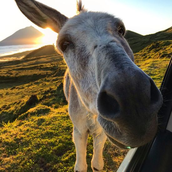 Close-up portrait of donkey standing on land