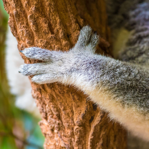 Cropped hand on animal holding tree trunk