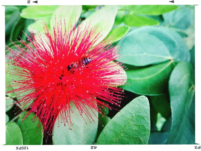 Red flower, green leaves & a bee Landscape #Nature #photography EyeEm Nature Lover Popular Photo Hugging A Tree