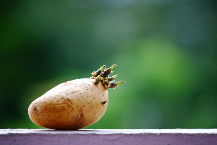 Close-up of potato on retaining wall