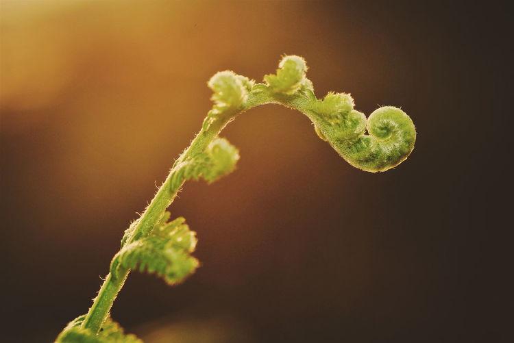 Close-up of green leaf against black background
