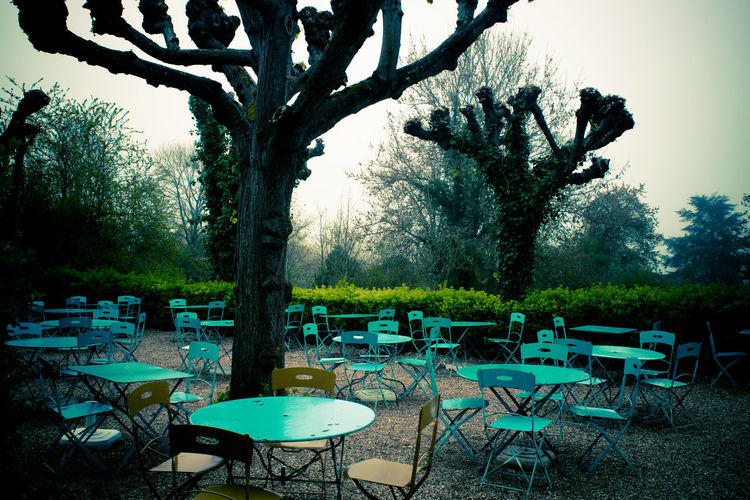 Misty morning in Giverny Plant Tree Nature Day Outdoors Tranquility Giverny France Europe Walking Path Forest Trees Sky Fog Mist Morning Light And Shadow Light Mysterious Springtime Silhouette Travel Destinations Vacations Hazy  No People