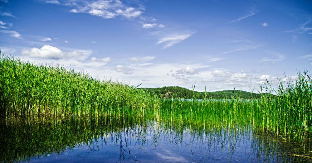 Beauty In Nature Blue Cloud Cloud - Sky Day Field Grass Grassy Green Green Color Growth Idyllic Lake Landscape Nature No People Non-urban Scene Outdoors Plant Rural Scene Scenics Sky Tranquil Scene Tranquility Water