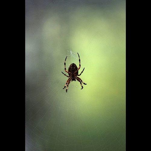 Природа паук паутина макро nature spider macro