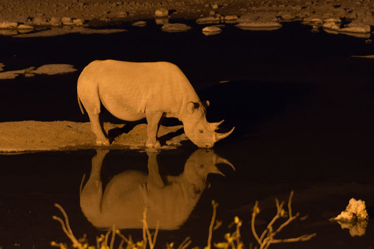 Close-up of an animal on rock at night