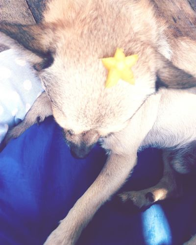 Pets Domestic Animals One Animal Dog Love Star Fruit  EyeEmNewHere