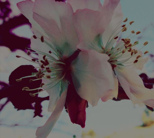 Flower Abstract No People Close-up Fragility Nature Beauty In Nature