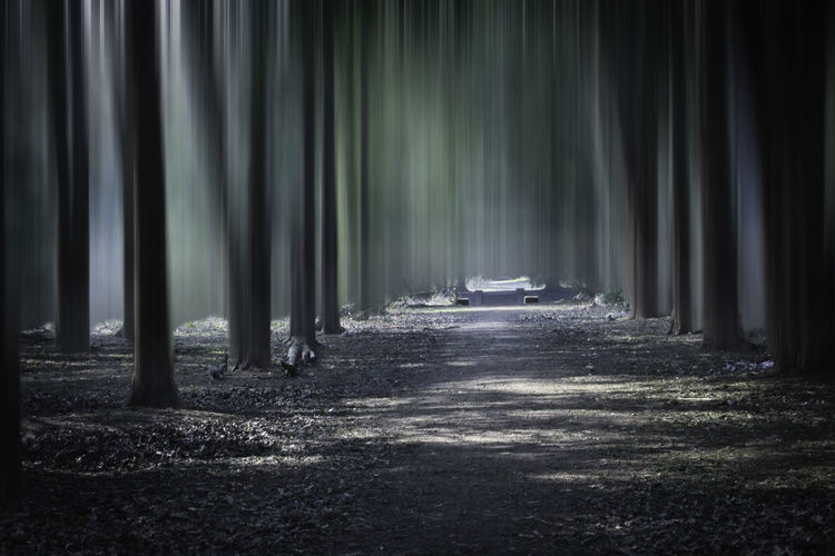 'Into the Forest' Cutting Through Dappled Light Day Eerie Fairytale  Forest Lonley Misty Misty Woods Mysterious Mystery Nature No People Outdoors Pathway Selective Focus Serenity Spooky Surreal The Way Forward Through The Trees Tree Unreal Woodland Scene Woods