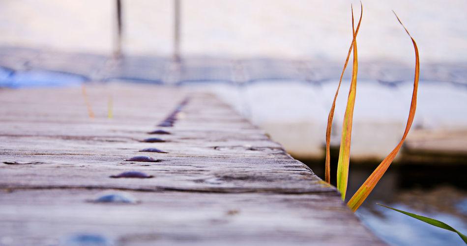 Grass by wooden pier