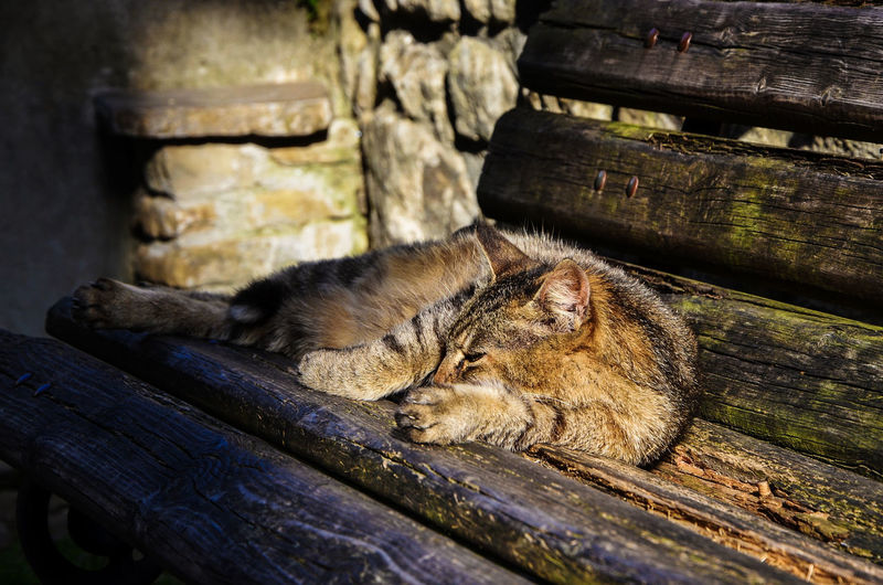 Sleeping Animal Sleepingcat Resting Chilling Afternoon Rest Animal Animal Themes Cat Domestic Animals Domestic Cat Focus On Foreground Laziness One Animal Resting Rural Scene Selective Focus
