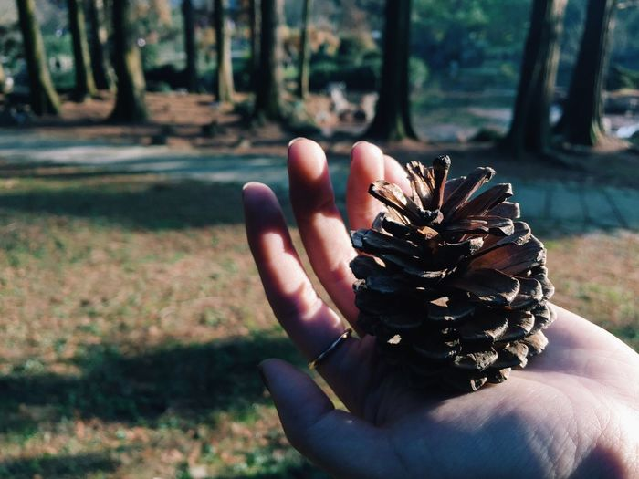 Human Hand Human Body Part Focus On Foreground Holding Beauty In Nature Pinecone Cute EyeEm Nature Lover Walking In The Woods