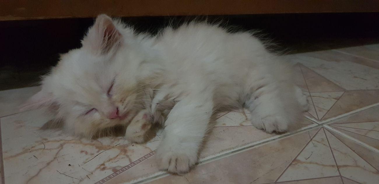 Mình tên Lip Pets Feline Domestic Cat Close-up