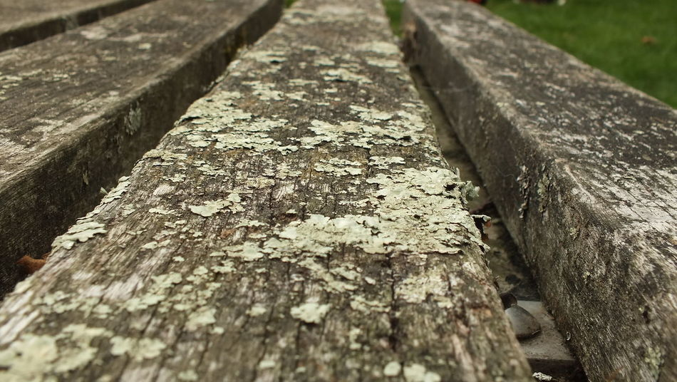 Backgrounds Bench Close-up Day Diminishing Perspective Focus On Foreground Lichen Metal Nature No People Outdoors Pattern Plank Rough Selective Focus Surface Level Textured  Timber Tree Weathered Wood Wood - Material