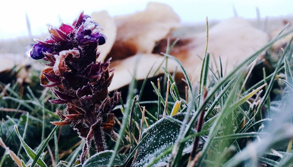 Plant Flower Flowering Plant Growth Close-up Nature Beauty In Nature Day Flower Head Focus On Foreground No People Petal Field Outdoors Land EyeEmNewHere The Traveler - 2018 EyeEm Awards The Great Outdoors - 2018 EyeEm Awards Autumn Mood It's About The Journey