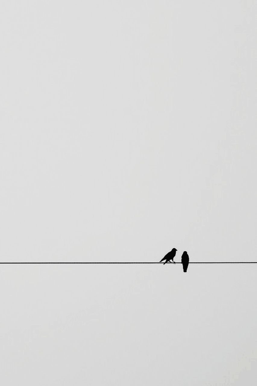 LOW ANGLE VIEW OF SILHOUETTE BIRD PERCHING ON CABLE