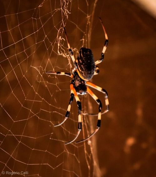 The spider Spider Spider Web One Animal Animal Themes Survival Animals In The Wild Web Animal Leg Focus On Foreground Nature Close-up No People Intricacy Trapped