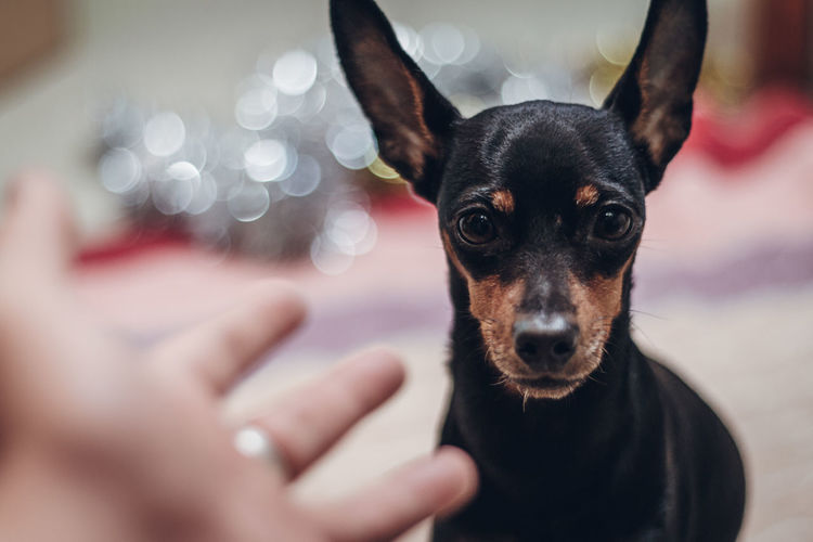 Portrait of dog with hands against bokeh