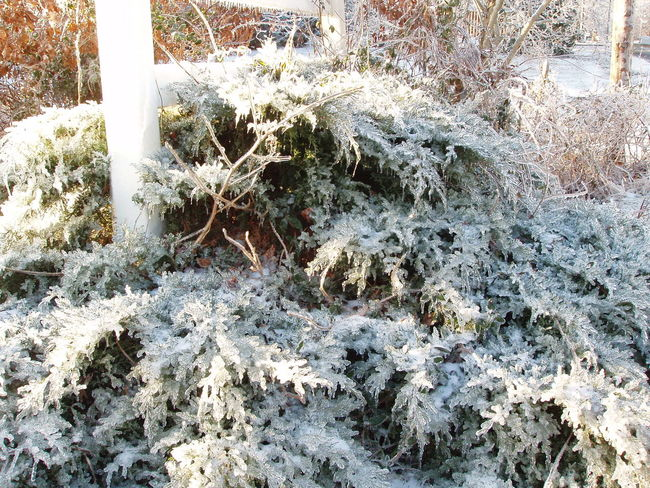 Abundance Close-up Cold Cold Temperature Ice Ice Covered  Ice Storm Natural Pattern Nature Plant Power In Nature Rough Season  Textured  Winter
