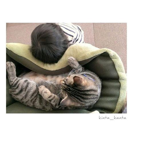 金太郎が好き過ぎて…♥ εïз。* ダーイブ♥♥ でも、金太郎はちょっと、いや、だいぶ?迷惑そう…笑 1歳10ヶ月 1歳5ヶ月 男の子 息子 仲良し兄弟ムスコおやばか親ばか部brotherネコ猫金太郎