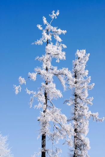 Minsk, Loshica Park Frozen Snow ❄ Winter Beauty In Nature Blue Day Nature Outdoors Tree