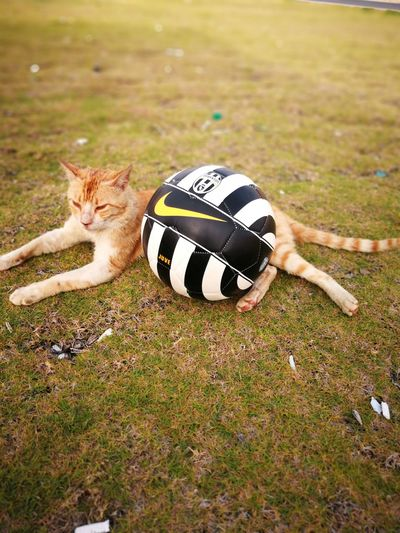 Pets Soccer