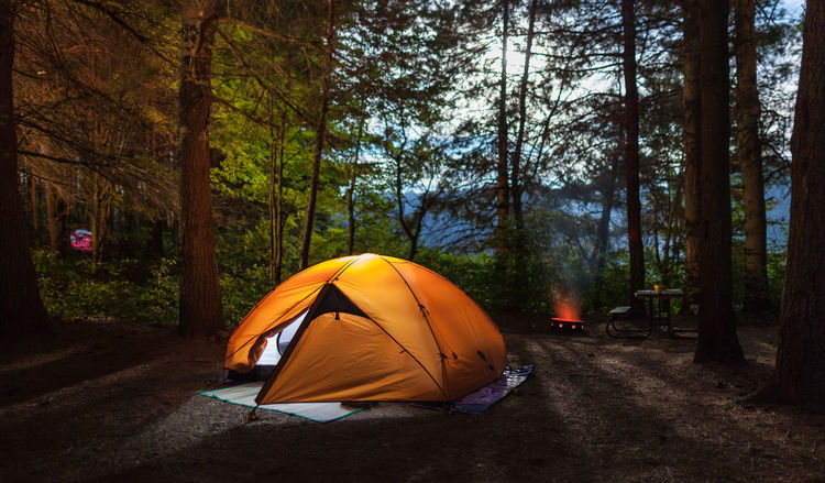 Adventures Campfire Adventure Beauty In Nature Camping Camps Day Environment Fire Forest Forrest Illuminated Landscape Long Exposure Nature Night No People Outdoors Pine Tree Scenery Shelter Sky Tent Tentacle Tree