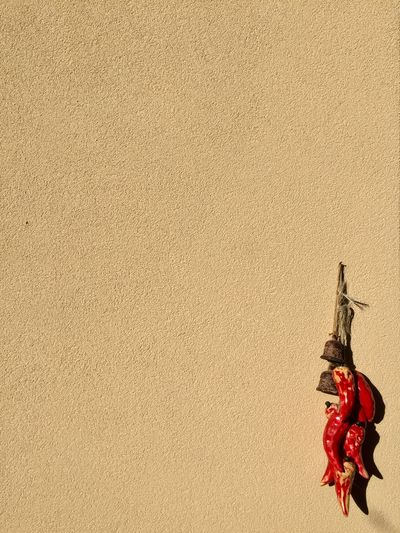 Chili wall - Pesaro - Italy Architecture Backgrounds Bell Brown BYOPaper! Chili  Chili Pepper Conceptual Cornetto Day Exterior Italy Minimalism No People Outdoors Photo Photographer Photography Photooftheday Photoshoot Red Texture Textured  The Great Outdoors - 2017 EyeEm Awards Wall