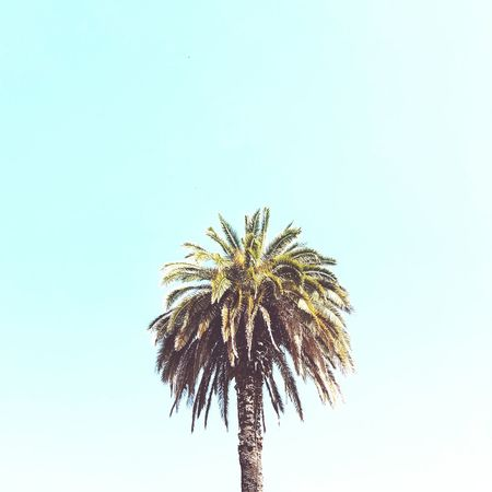Summer vibes First Eyeem Photo Nopeople Palmtree Summer Relax Sun Porto Portugal Minimal Minimalistics