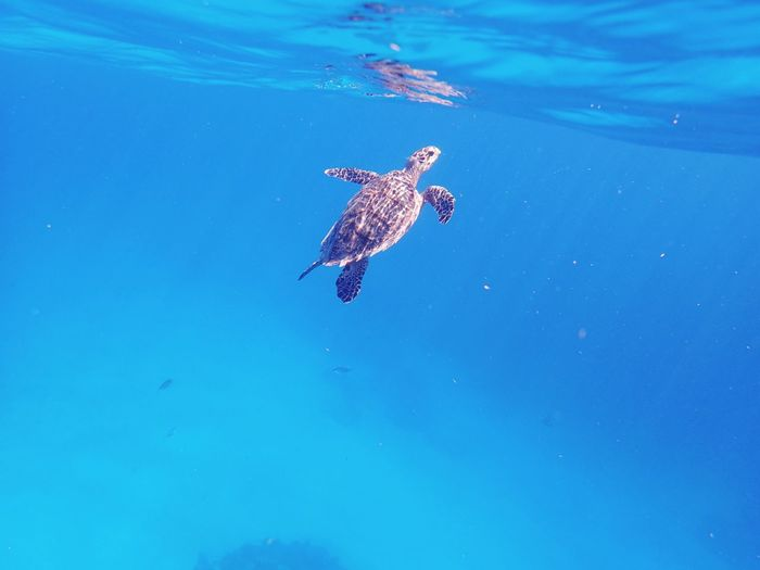 Sea Turtle 🐢 Blue Tranquil Scene Beauty In Nature Turtle First Eyeem Photo