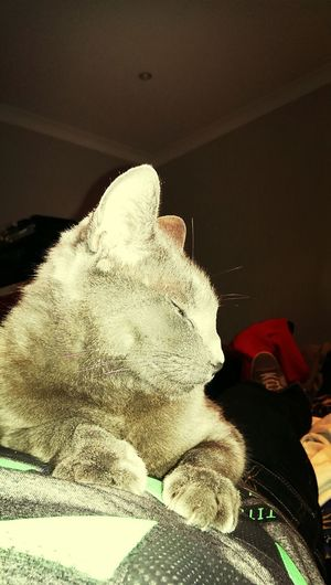 relaxing on my tummy! Catlover Catoftheday Lovecats Aristocats
