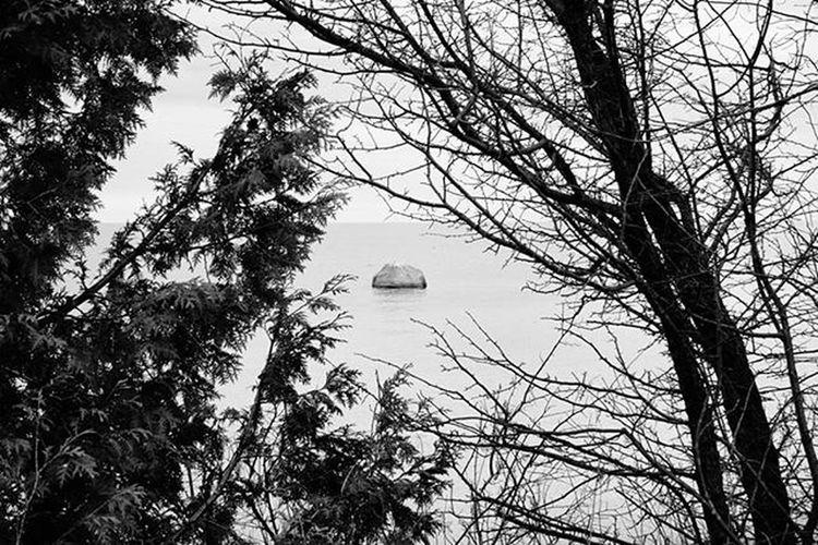 Frame Reimerpics Blackandwhite Photo Trees Framed Georgianbay
