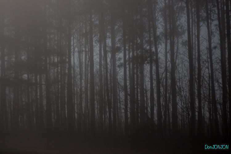 Backgrounds Beauty In Nature Creepy Night Fog Foggy Night Forest Full Frame Nature No People Outdoors Pines Forest Scenics Tranquil Scene Tranquility Tree Tree Line