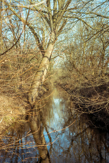 Tree Plant Bare Tree Water Branch No People Forest Nature Tranquility Trunk Land Day Tree Trunk Beauty In Nature Scenics - Nature Tranquil Scene Outdoors Waterfront Reflection WoodLand Flowing Water