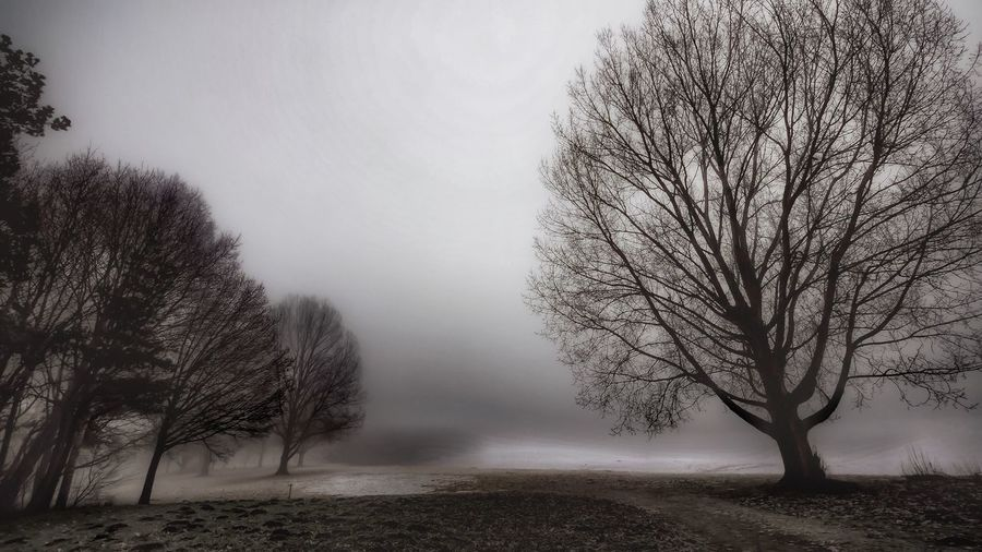 Foggy Morning Tranquil Scene Cold Morning Enjoying The View Wintertrees Learn & Shoot: Balancing Elements EyeEm Best Shots Nature Photography Spooky Atmosphere Nature Art Fine Art Beautiful Nature EyeEm Best Edits Tree Branches Morning Light Wintertime Nature On Your Doorstep Winter Trees Lake View Frozen Lake Lake Tree Treescape Landscape who likes it spooky 👻👻👻