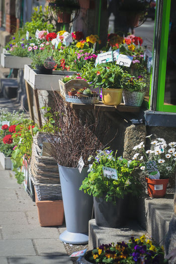 Architecture Beauty In Nature Bouquet Choice Day Florist Flower Flower Head Flower Market Flower Shop For Sale Fragility Freshness Growth Multi Colored Nature No People Outdoors Plant Potted Plant Retail  Small Business Store Street Variation