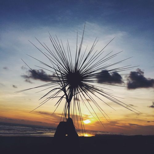 Sunset Silhouette Sky Sun Nature Beauty In Nature Orange Color Flower Outdoors Beach Central Java, Indonesia