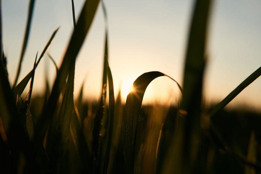 sunset memories Summer Memories Field Growth Rural Scene Close-up Beauty In Nature Nature Landscape Sunset Sunset Memories Sun Tranquility Sunlight Selective Focus Depth Of Field Bokeh Shootermag EyeEm Best Shots Lucky's Memories Silhouette Grass Melancholy Mood Sunset Silhouettes