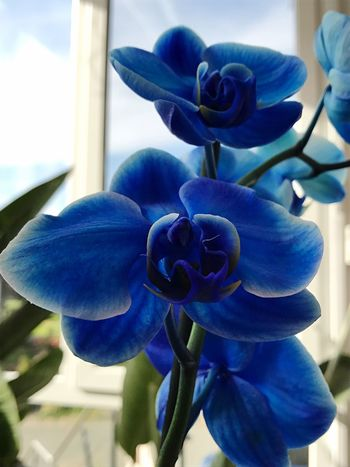 Flower Beauty In Nature Petal Nature Fragility Flower Head Growth Freshness Close-up Plant Day No People Blue Blooming Outdoors Orchid Neon Life