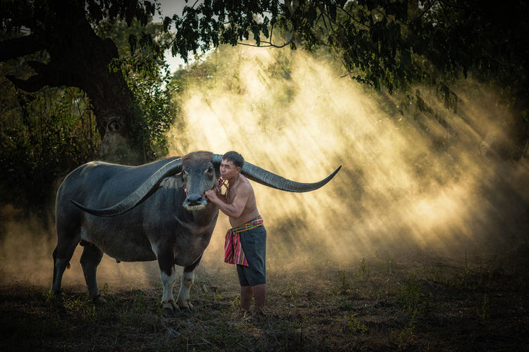 Asian farmer with buffalo in the forest. Adult Agriculture Day Domestic Animals Farmer Field Fog Full Length Livestock Mammal Men Nature One Animal One Man Only One Person Outdoors People Tree
