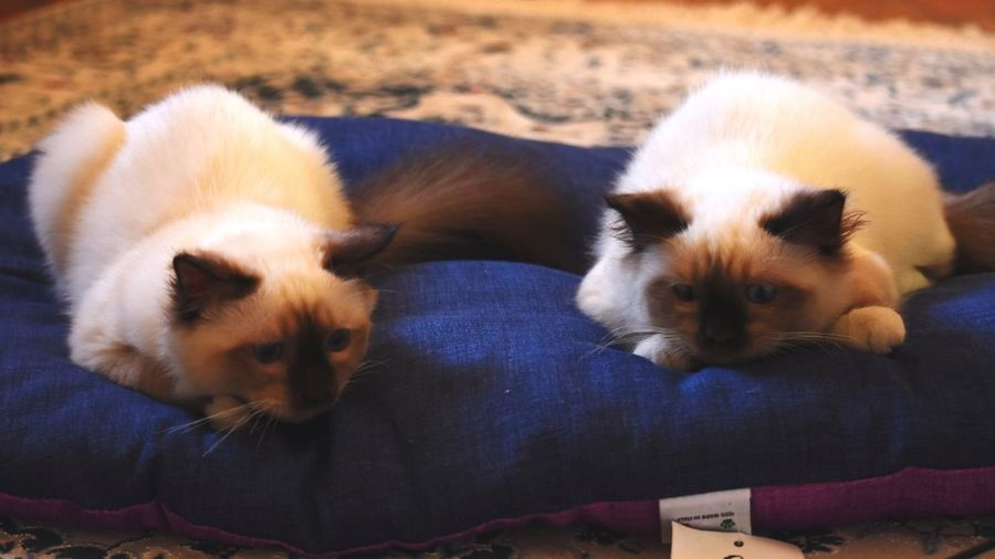 Portrait of cats relaxing