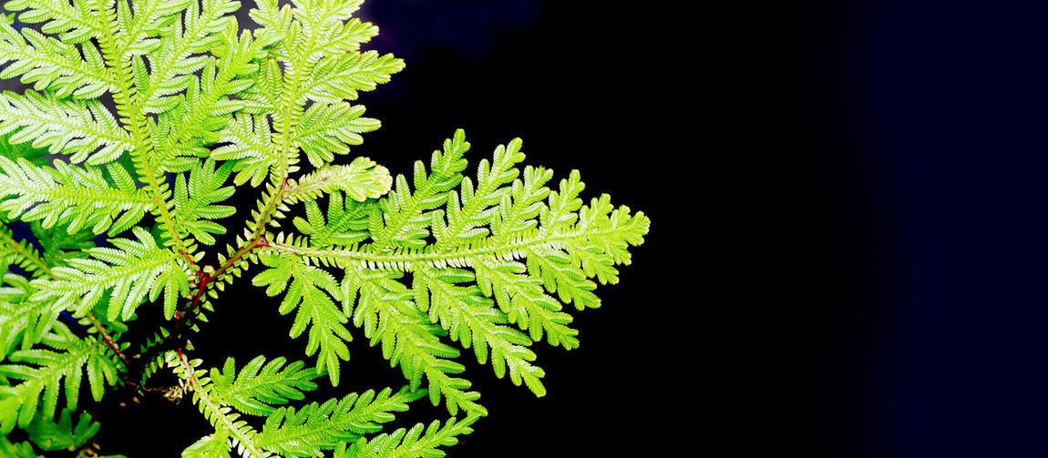Nature Photography Textures and Surfaces Beauty In Nature, Closeup Photography Details Of Nature Fern Fern Leaves Texture Growth In Nature Rare Beauty Rare Photography